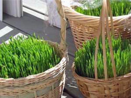 Wheatgrass easter baskets grasses easter and easter baskets i love to grow grass seeds in baskets for easter it is so fresh and negle Image collections