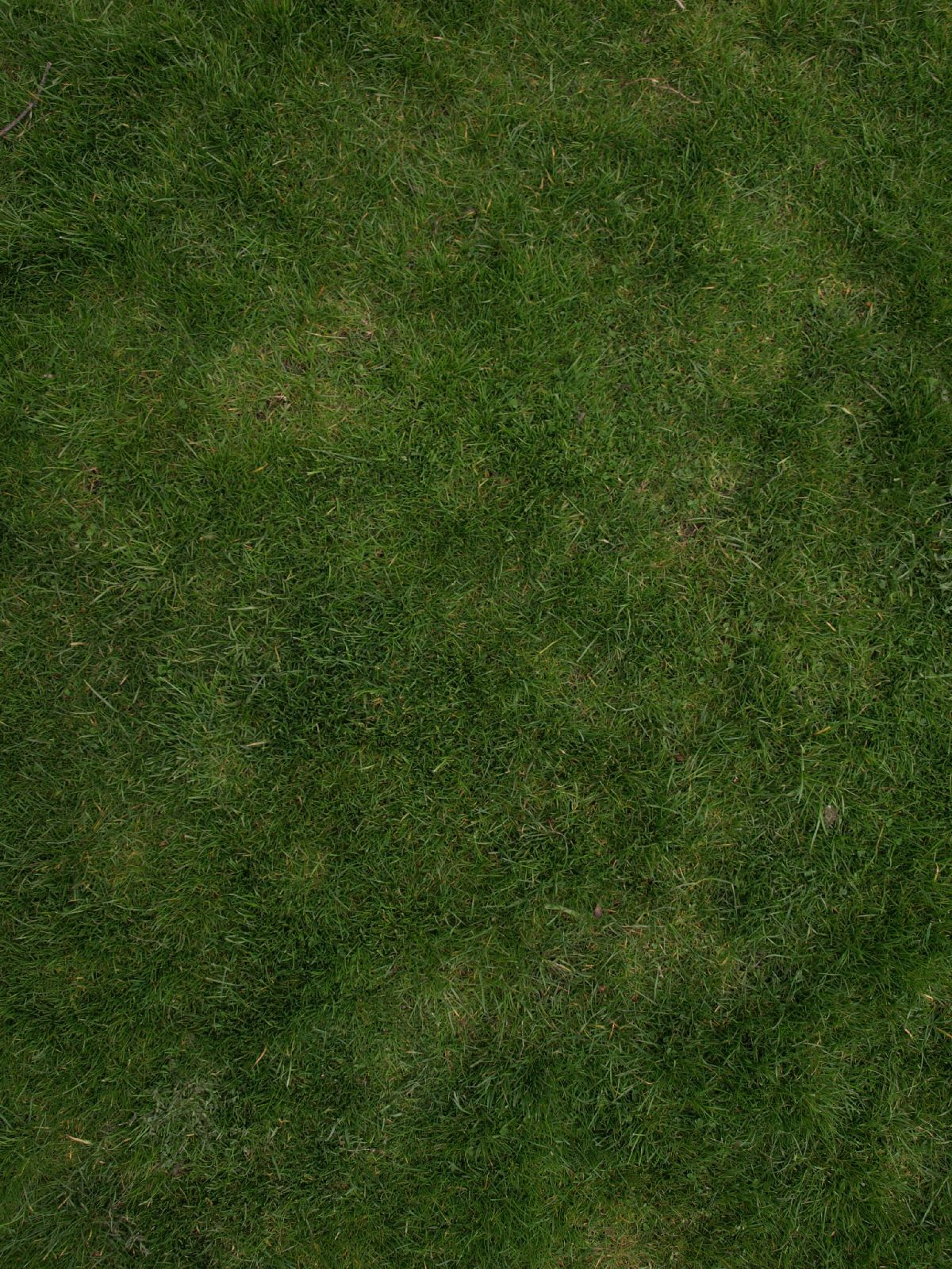 Grass Blades Free Vector Art - (24,916 Free Downloads)