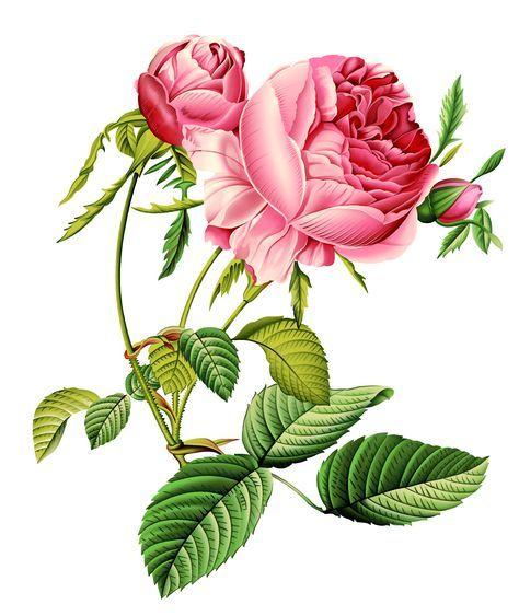 Best Flowers Acuarela Wallpaper Ideas