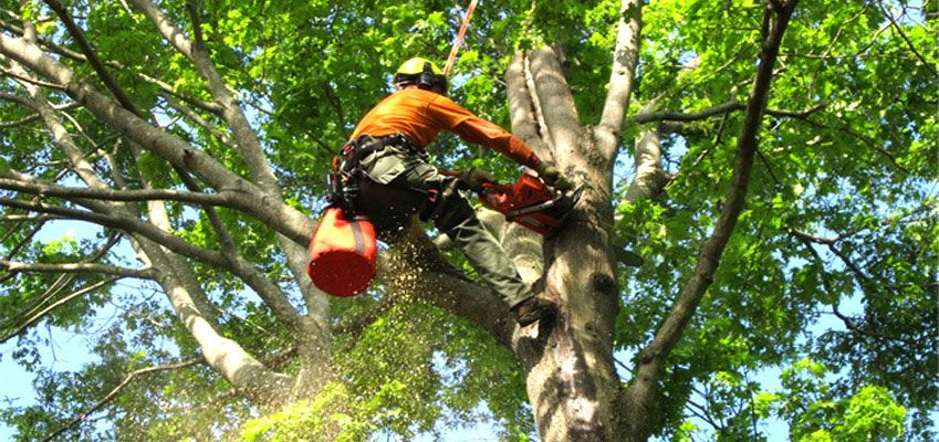 Pin by Tree Service on Tree Service Ajax in 2020 Tree