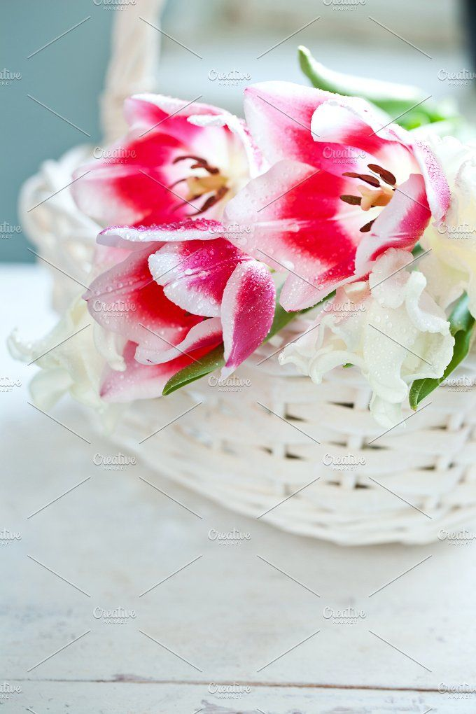 Tulip flowers in basket Photos Tulip flowers in white basket by eleana