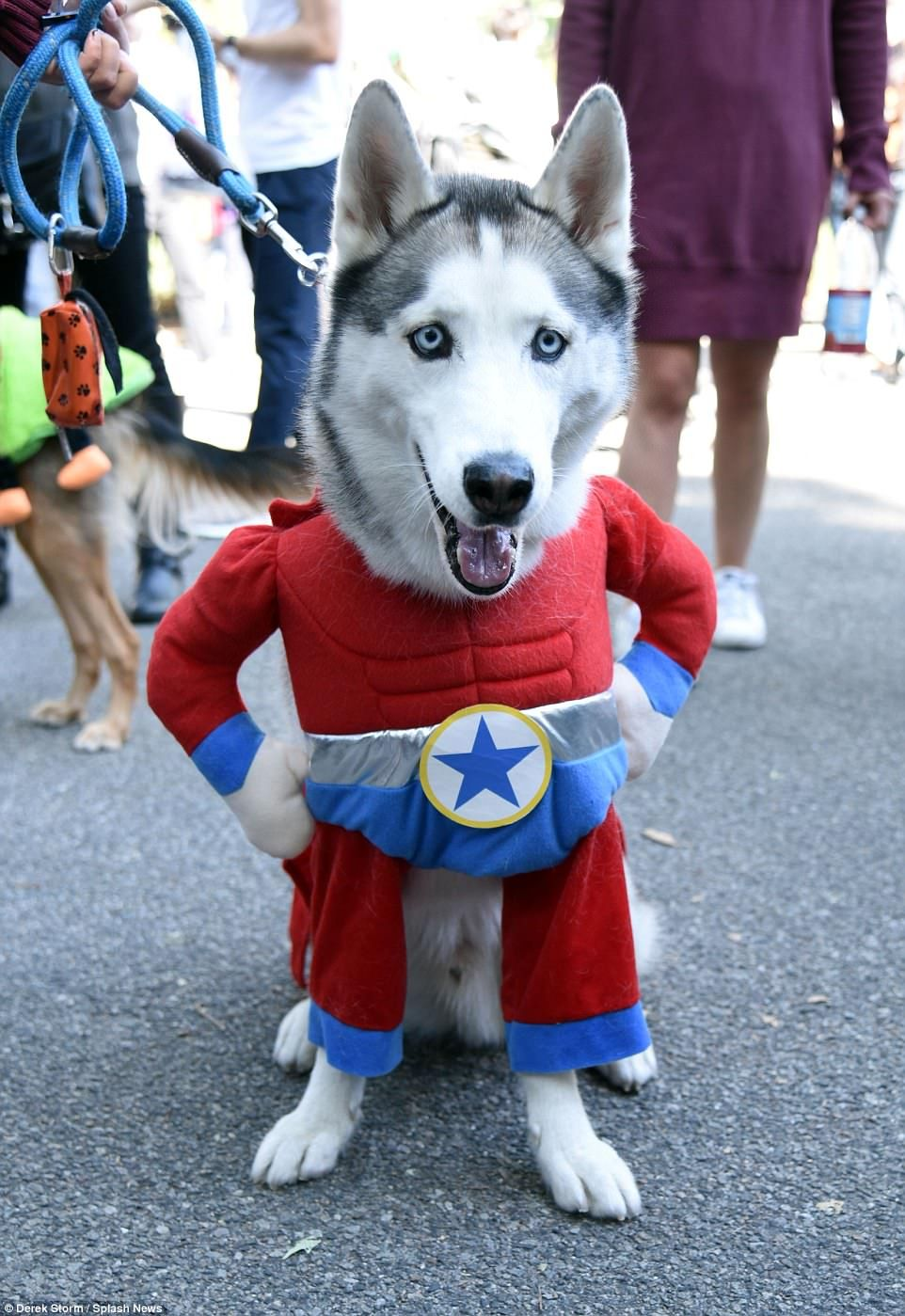 New York Dogs Dress Up For City S 27th Annual Halloween Pup Parade