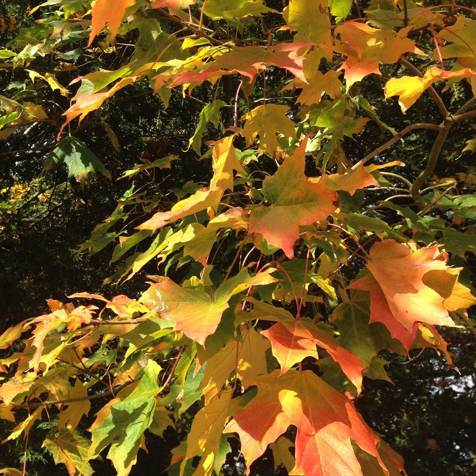 http://rememberingtheoldways.blogspot.co.uk/2015/10/early-autumn-days_5.html?utm_source=feedburner