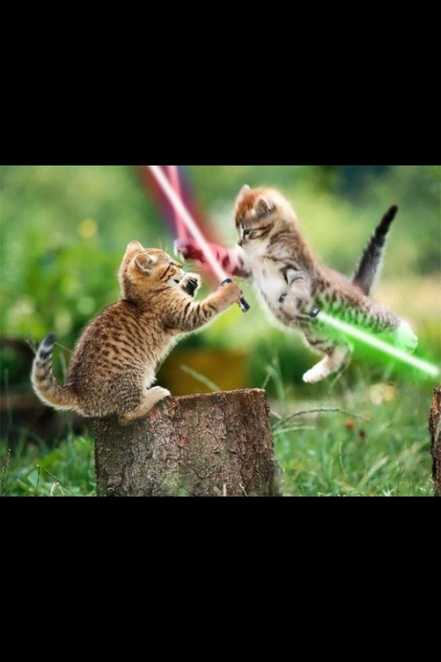 Cat Fight Star Wars Style Kittens Cutest Funny Cat Wallpaper Cute Animal Pictures