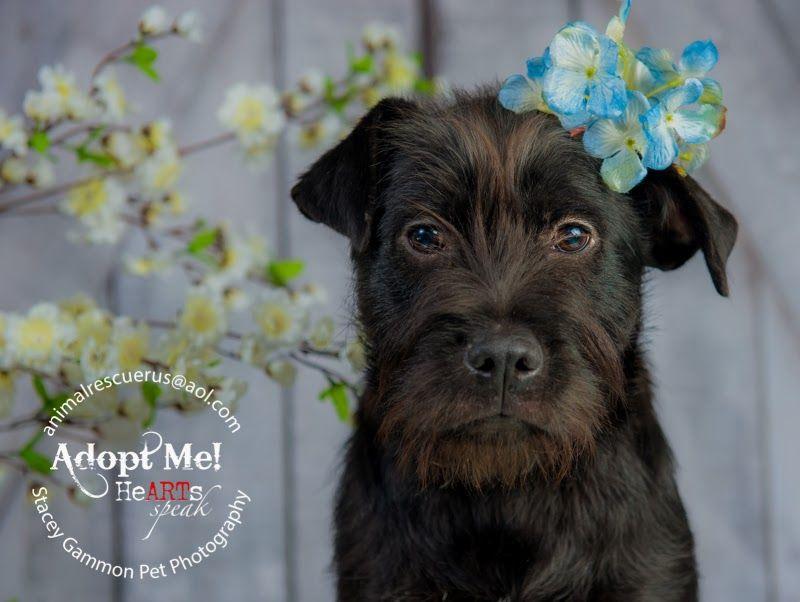 Page Not Found Animal Photography Pet Photographer Dog Adoption