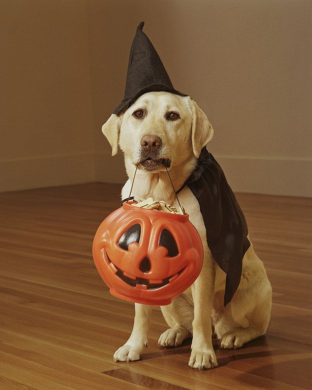 17 DIY Pet Halloween Costumes That Will Frighten The ...