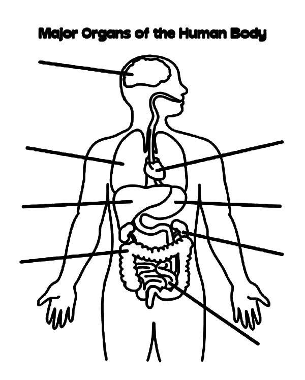 Human Body Coloring Pages Atividade Corpo Humano Corpo Humano