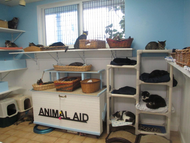 Cat Room Cat Room Foster Cat Cat Shelter