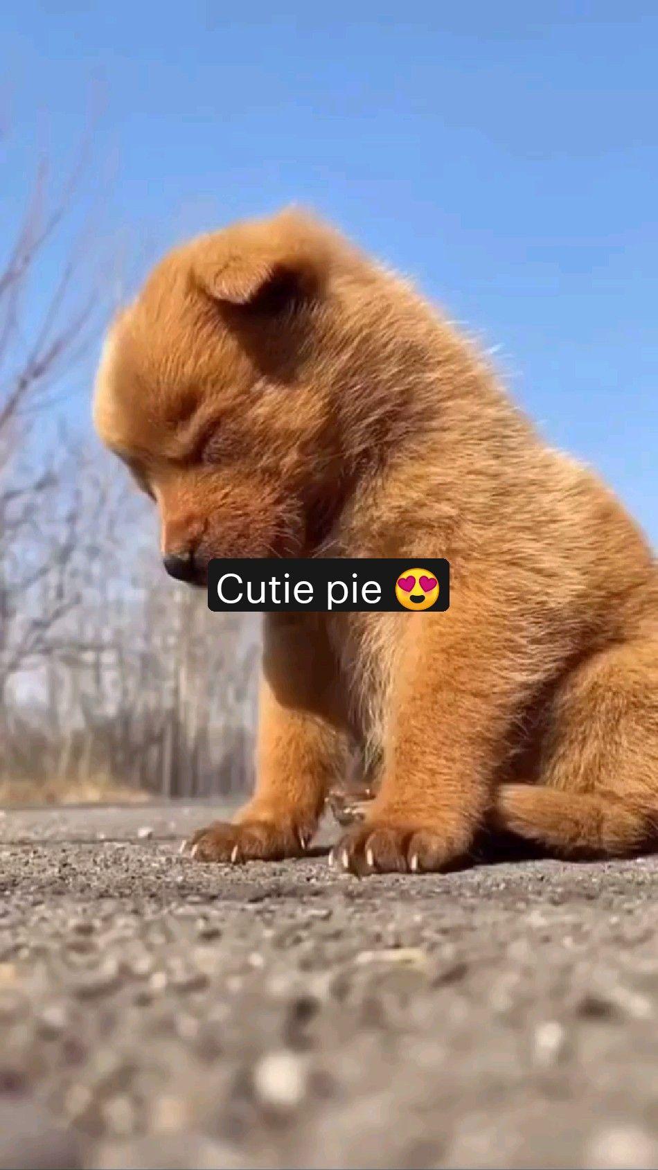 Cutie pie 😍
