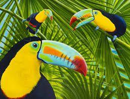 Resultado de imagen para tropical toucan