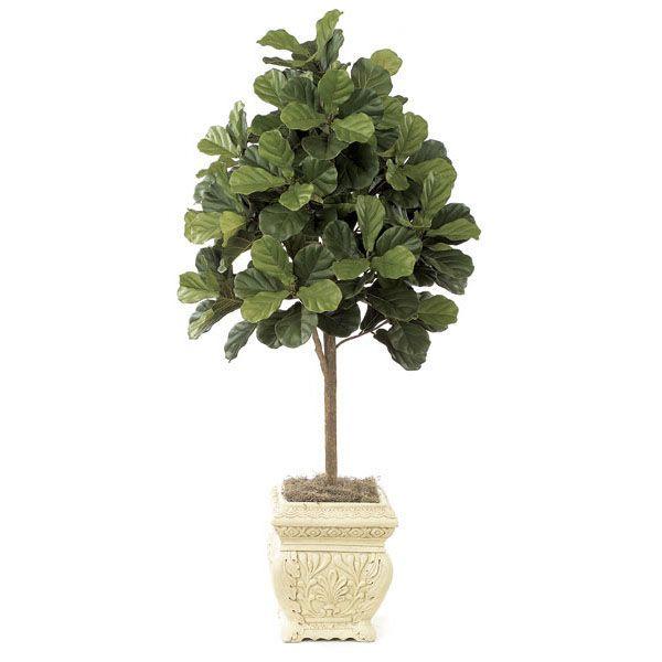 5 Foot Fiddle Leaf Fig Tree Potted Fiddle Leaf Fig Tree