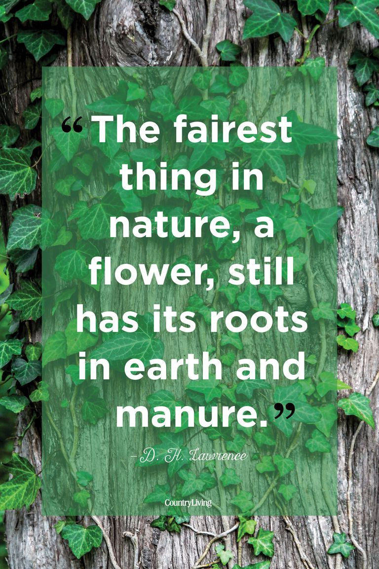 25 Beautiful Quotes About The Power Of Nature Thoughts Pinterest