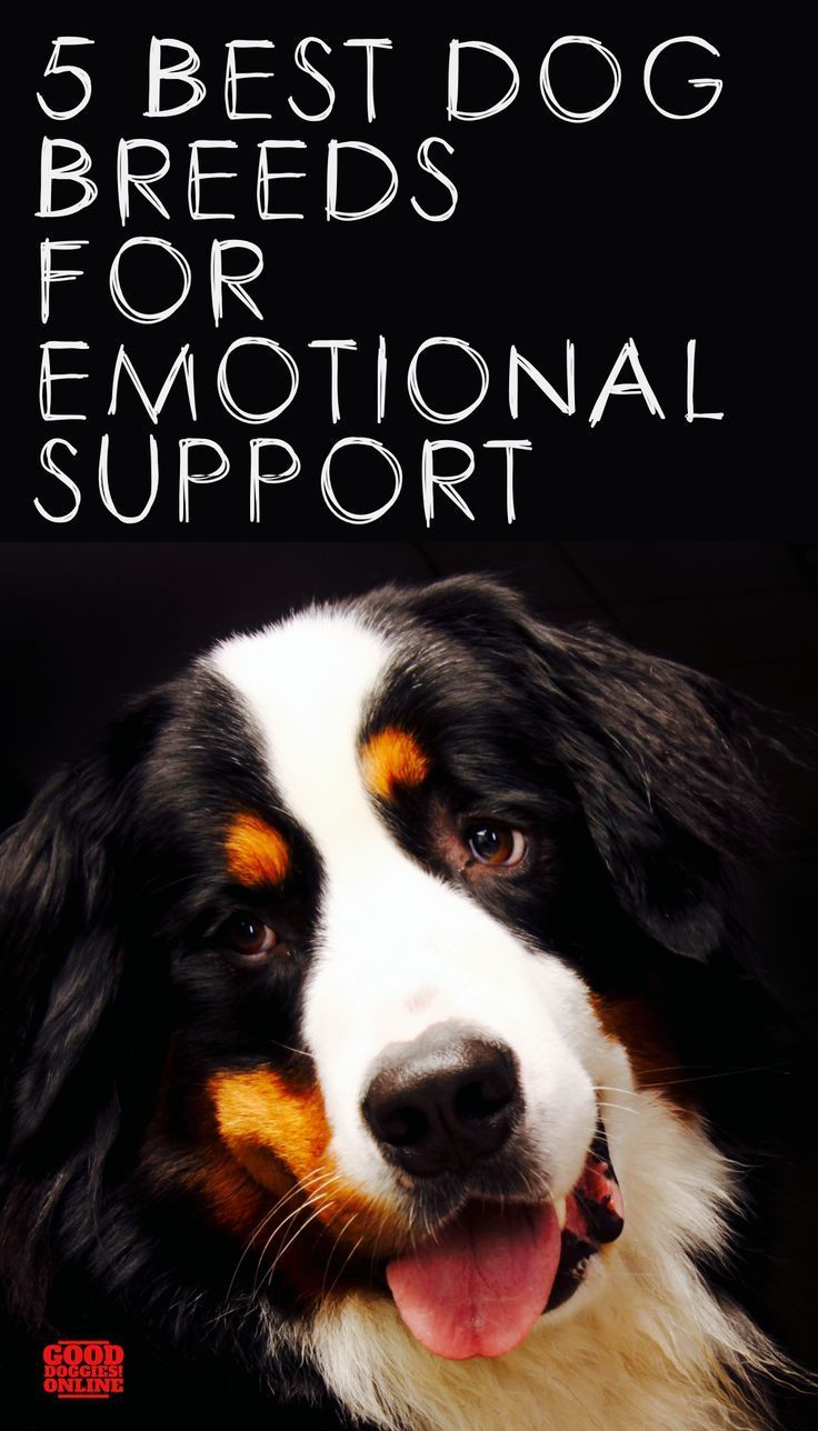 10++ Best emotional support animals for anxiety and depression ideas