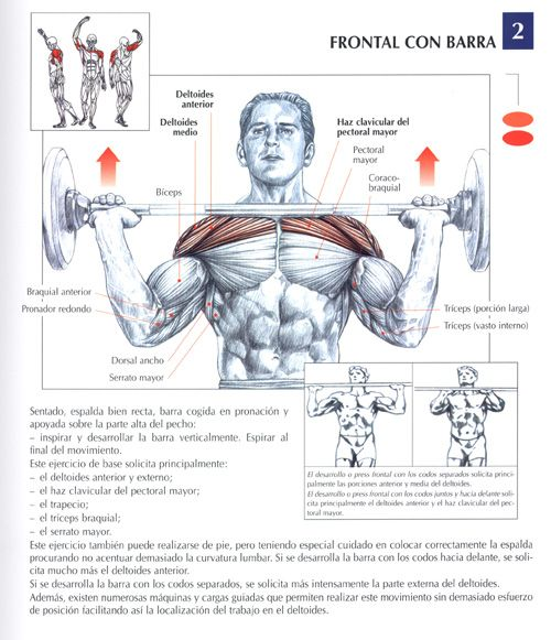 Ejercicios Imagenes Culturismo Total Fisicoculturismo Strength Workout Weight Training Workouts Shoulder Workout
