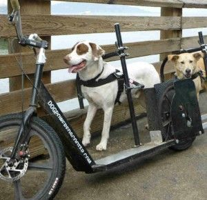 Dog Powered Scooters And Trikes Take Dog Walking To A New Level