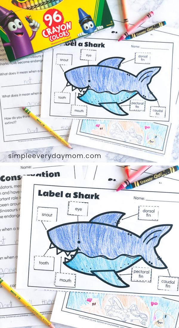 3 Free Printable Shark Worksheets To Teach Kids   Ocean ...