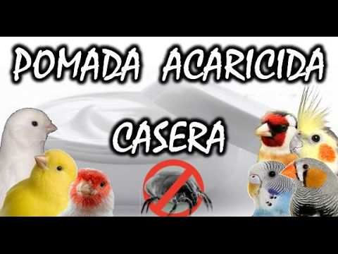 POMADA PARA ÁCAROS CASERA CANARIOS Y EXOTICOS | Remedios naturales |