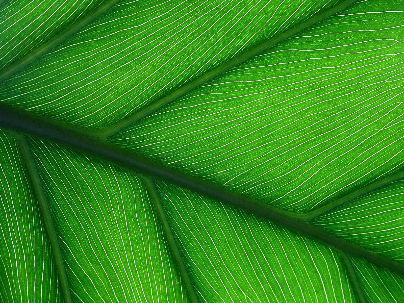 Green Leaf Leaf texture, Plant wallpaper, Texture