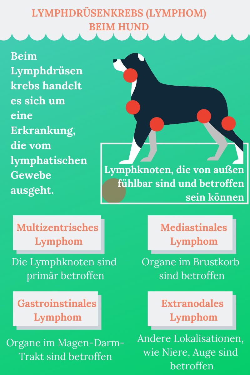 Lymphdrusenkrebs Beim Hund Hunde Gesunde Hunde Lymphknoten