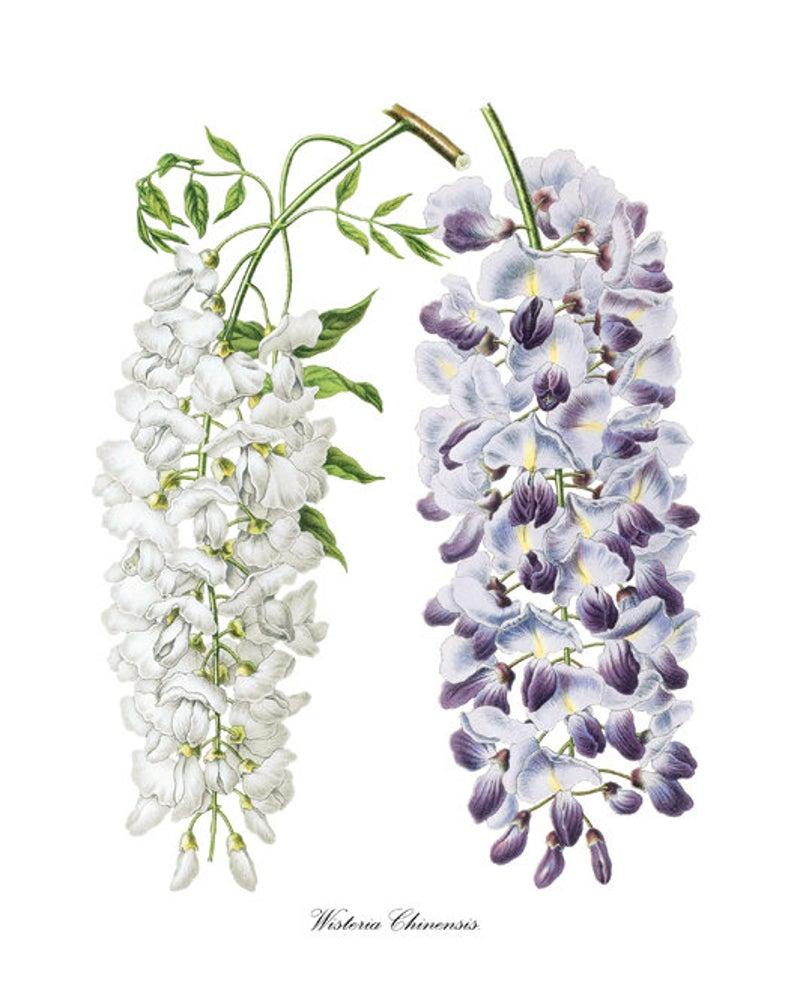 Pin On Floral Illustration