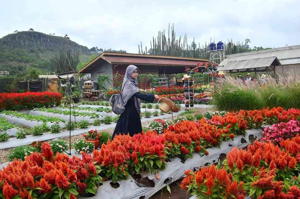 Rute Lokasi Dan Harga Tiket Taman Bunga Begonia Bandung Begonia Halaman Taman
