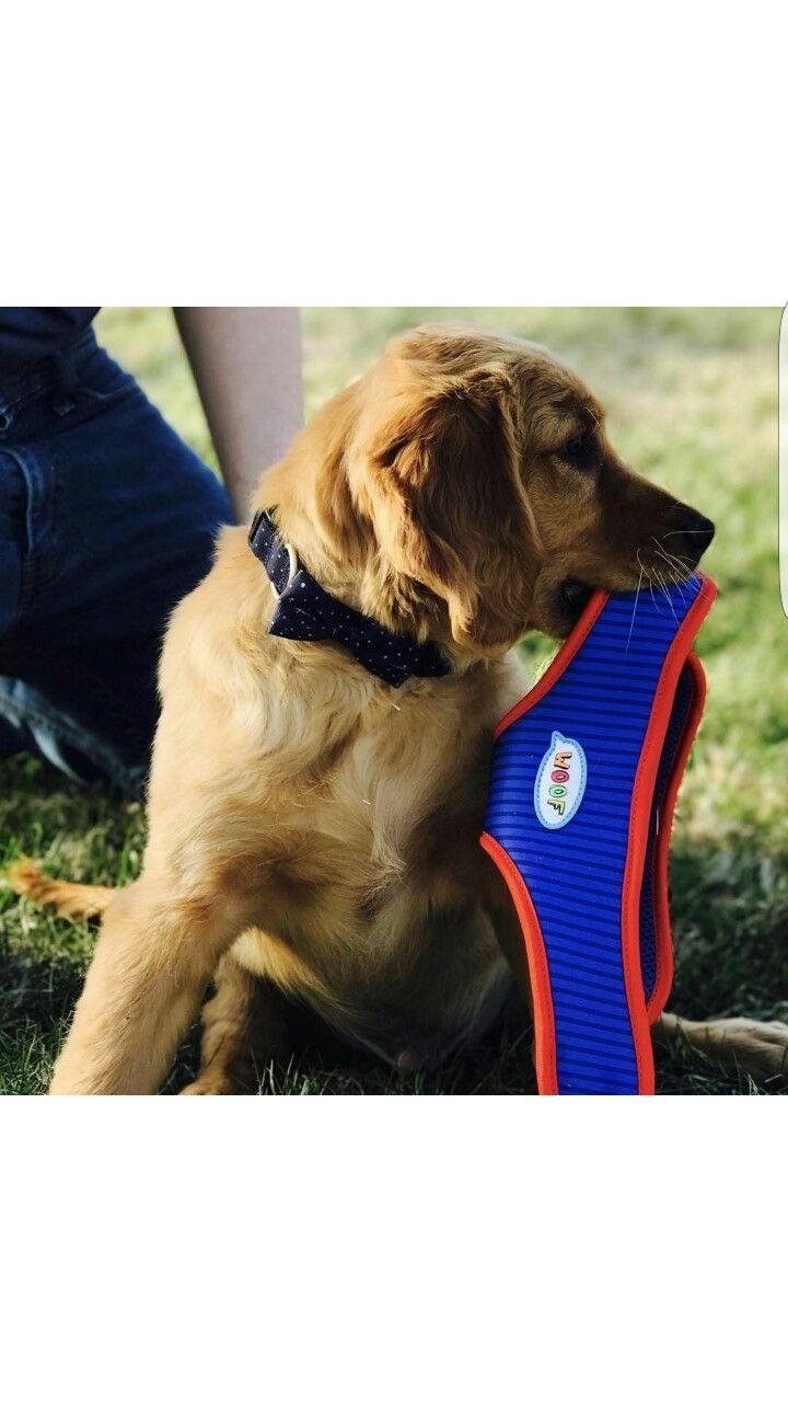 Ellen DeGeneres Dog Collar!!!! Amazing
