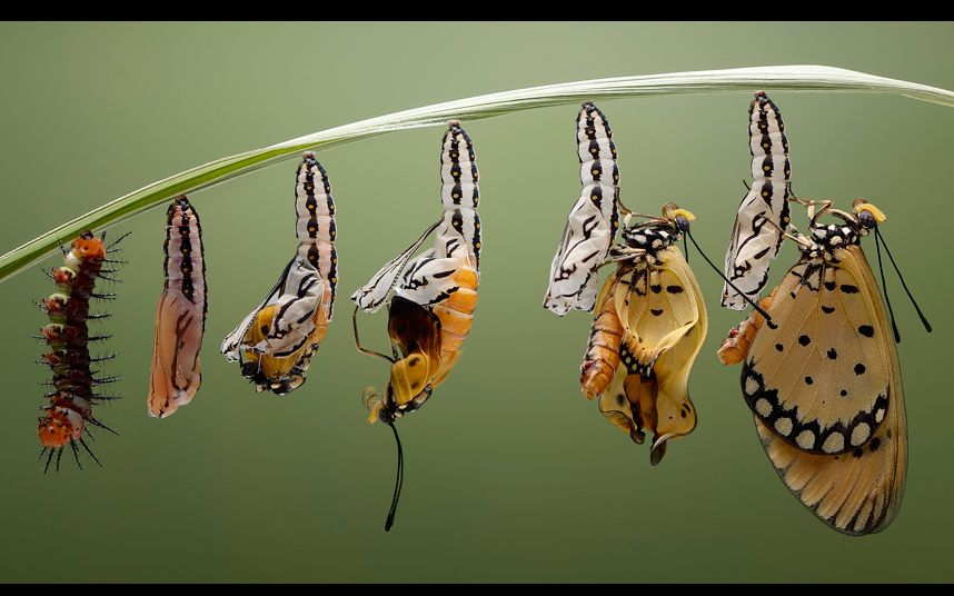Image result for animated gif butterfly transformation gif