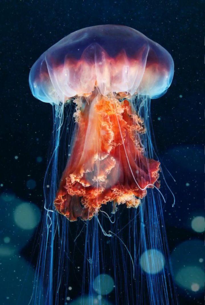 #scuba #oceanphotography #ocean #marine  #conservation #marinelife  #oceanart  #jellyfish www.storiesundersea.com