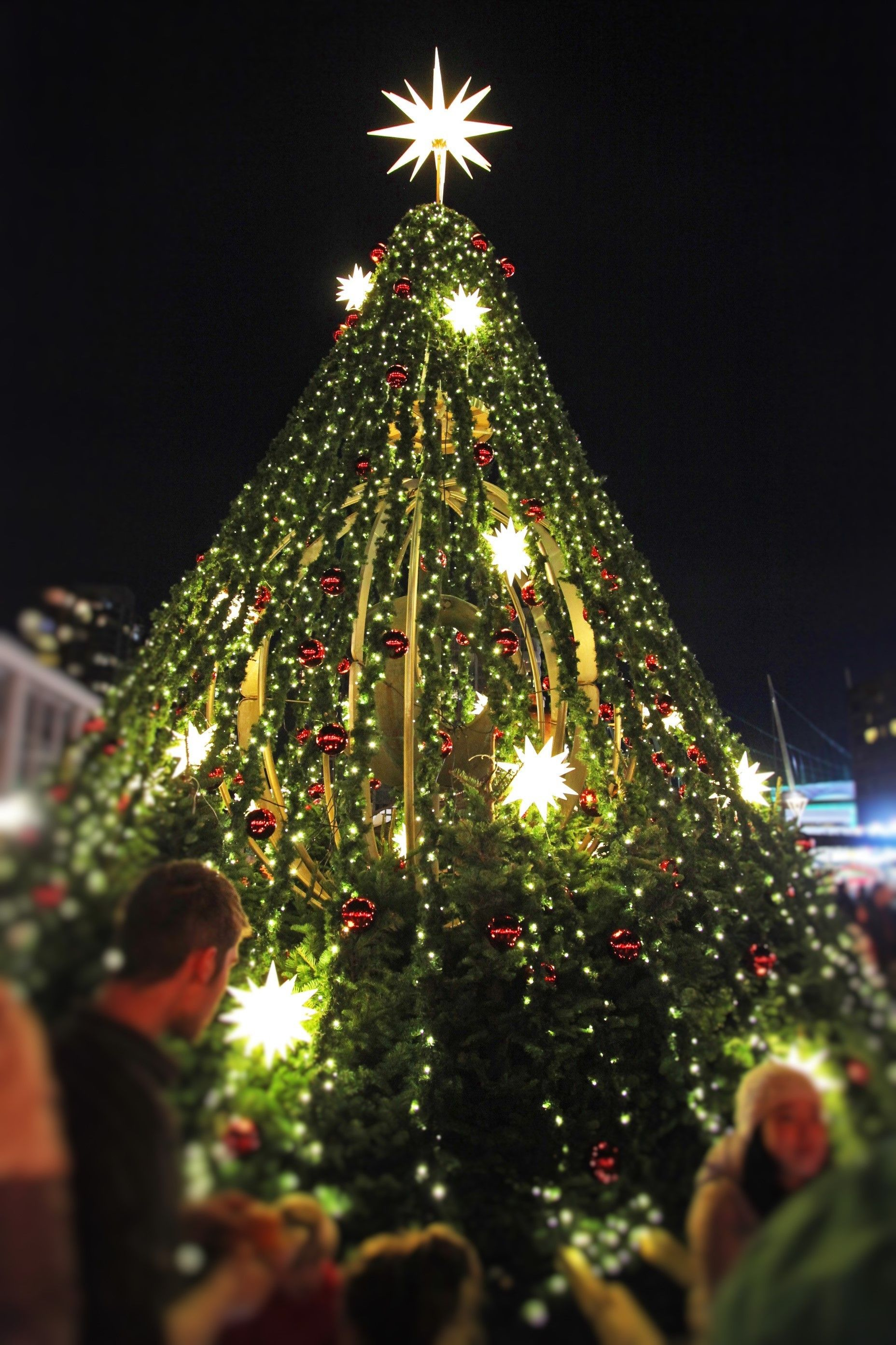 The Great Christmas Tree At The Vancouver Christmas Market, Brightened By  The Lovely Herrnhut Stars