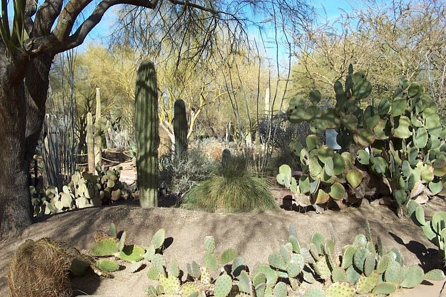 7699dfebd09aa054e60b0d2c106b75ef - Ethel M Chocolate Factory And Botanical Cactus Gardens Las Vegas