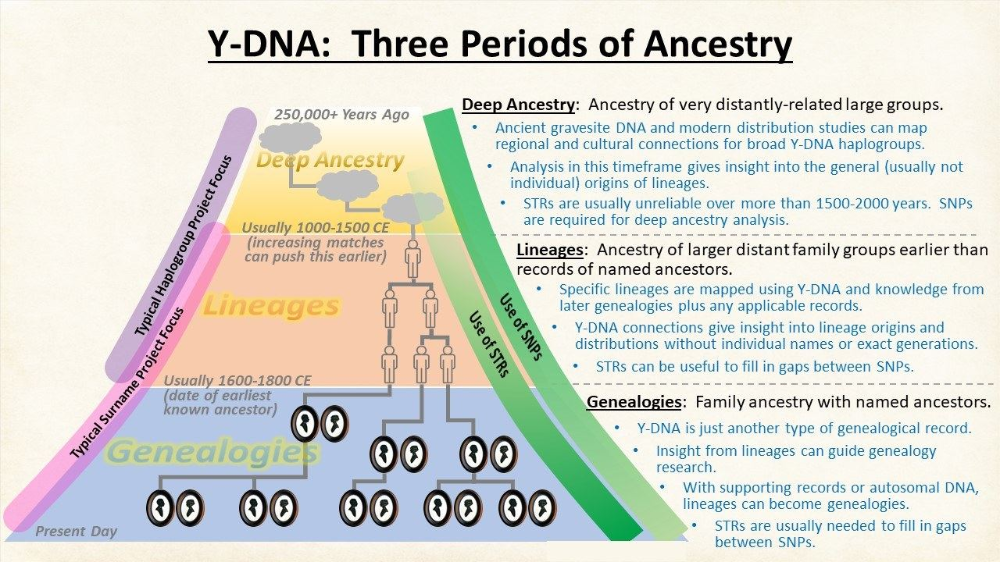 YDNA Three Periods of Ancestry Your