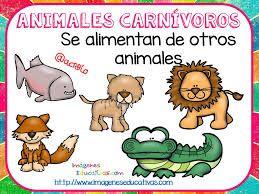 Resultado De Imagen De Animales Carnivoros Para Ninos De Preescolar Animales Carnivoros Tipos De Animales Fichas De Animales