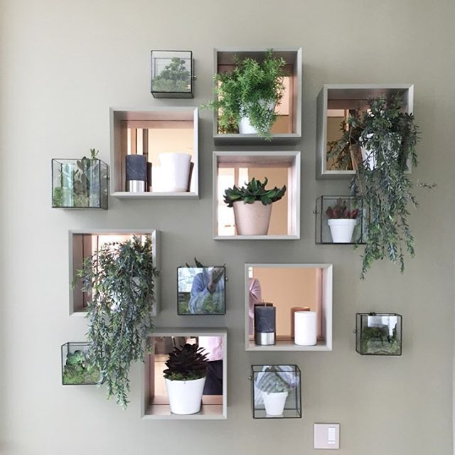 Monti On Instagram Pus Plants Collaborating With Interior Designers To Create Geometric Wall Goodness For All Your Plant Needs
