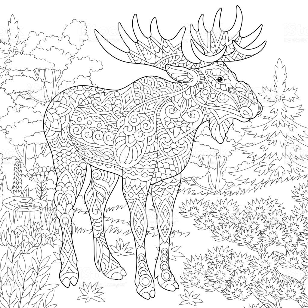 Coloring Page Of Moose Woodland Animal Forest Landscape