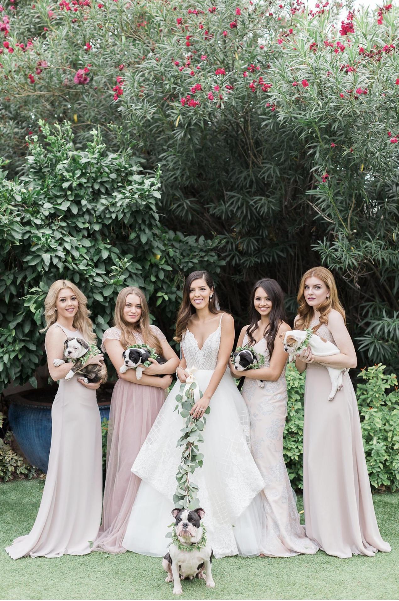 puppy bridal party- styled shoot at hacienda del sol in tucson