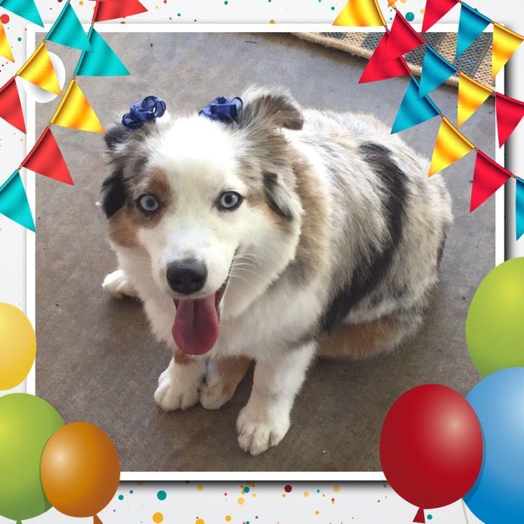Essie is one year old! July 3, 2015 One year old, Essie