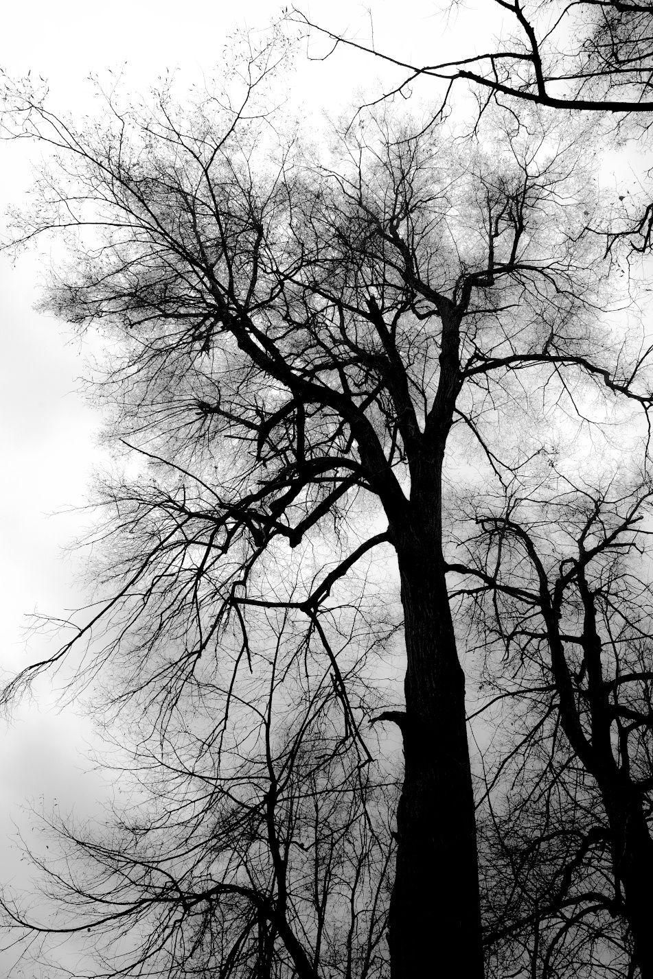Capillaries by Ivan Popov on 500px