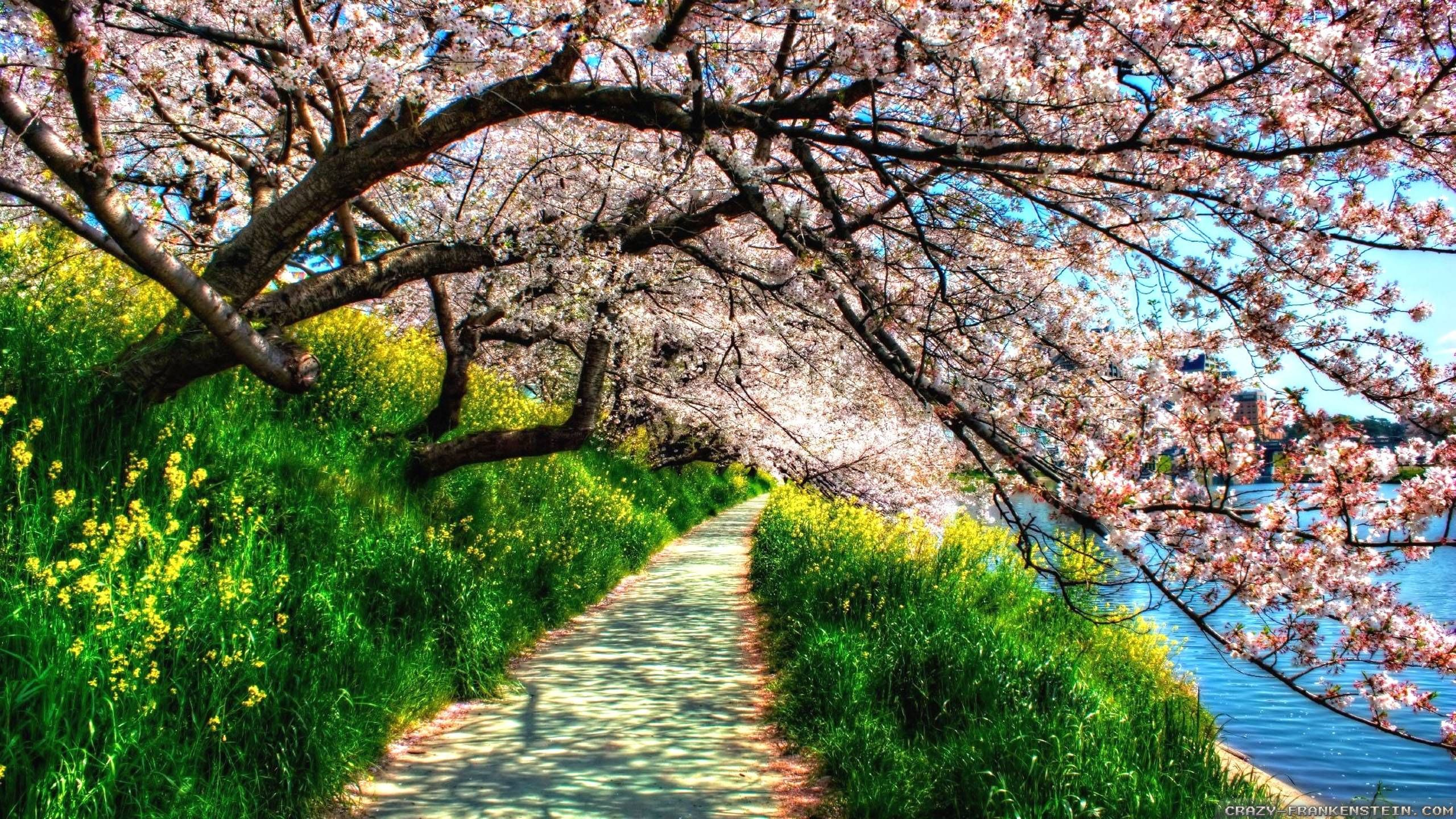 Beautiful Springtime Spring Nature HD wallpapers of Spring