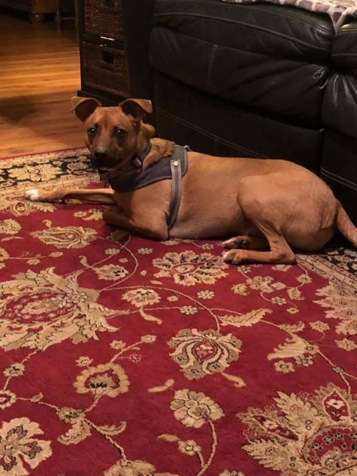 Get To Know Southbark Animal Rescue Pets Needing Homes In