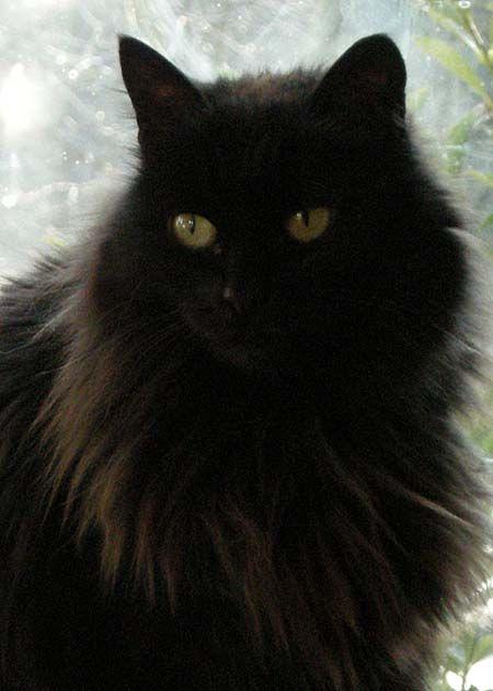 Poemas Del Rio Wang Muska Pretty Cats Russian Cat Cats