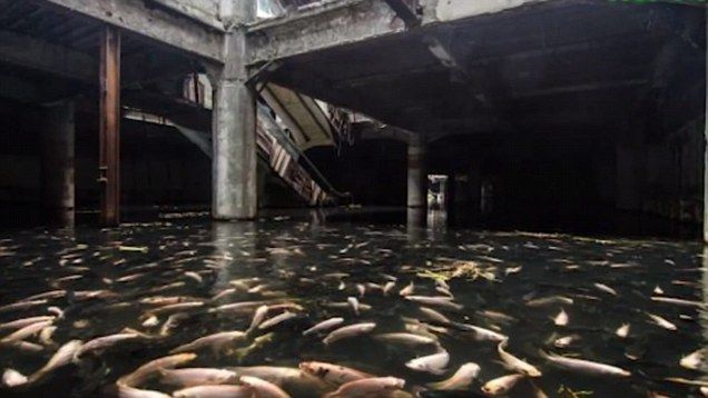 Farewell to Bangkok's abandoned New World mall aquarium. The fish have been relocated following the decision to knock down the building for safety reasons