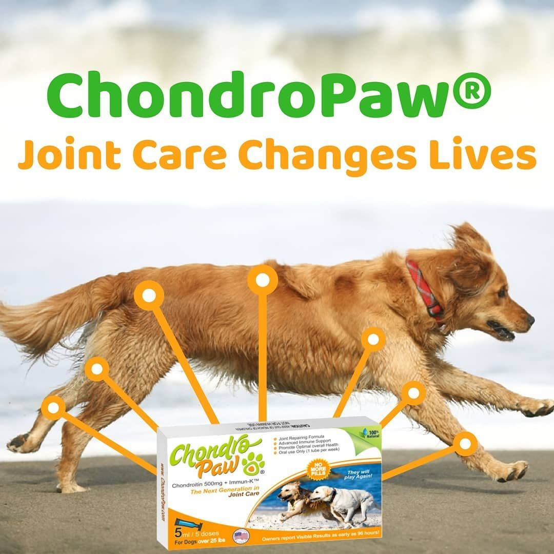 Chondropaw Is An Effective Joint Care Formula To Help Nourish