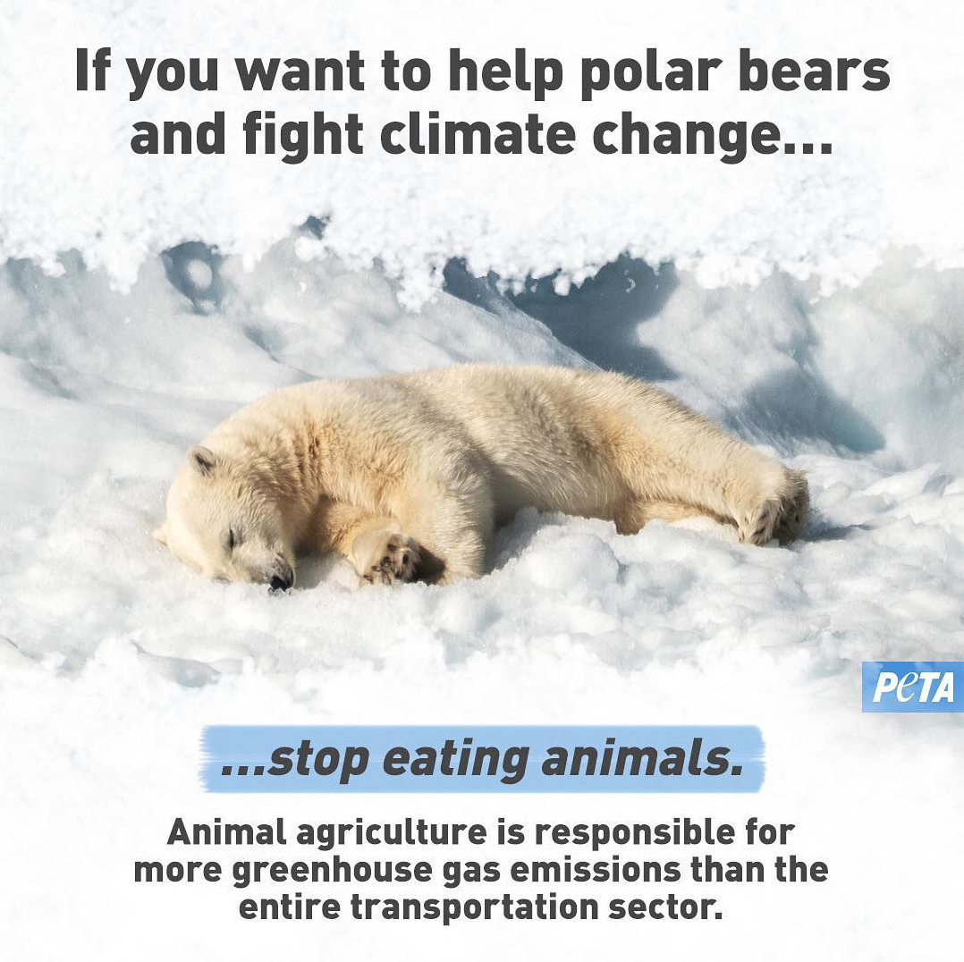 Climate Change and Animal Agriculture, Explained Animal