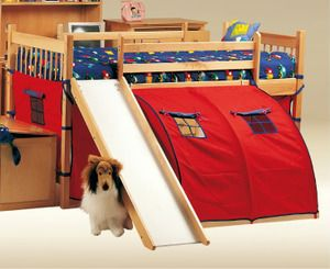 Junior Loft Bed W Slide Tent By Raymond Oak We Have This Need