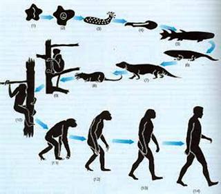 Charles Darwin Y El Origen De Las Especies Evolucion Del Hombre Evolucion Biologica Evolucion De La Vida