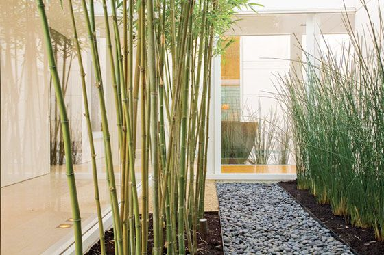 Back Yard Landscape Ideas - Horsetail Or Bamboo Plants For The