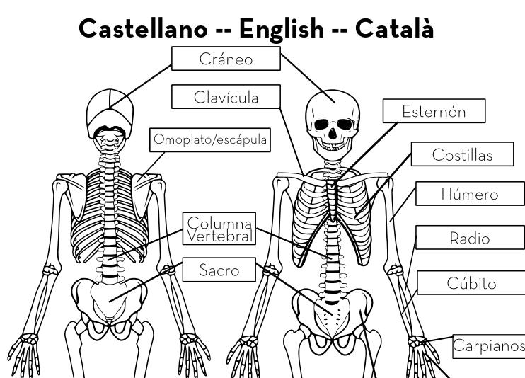 Esqueleto En Tamaño Real Imprimible Gratis Handbox Craft Lovers Comunidad Diy Tut Esqueleto Humano Para Niños Esqueleto Humano Cuerpo Humano Para Niños