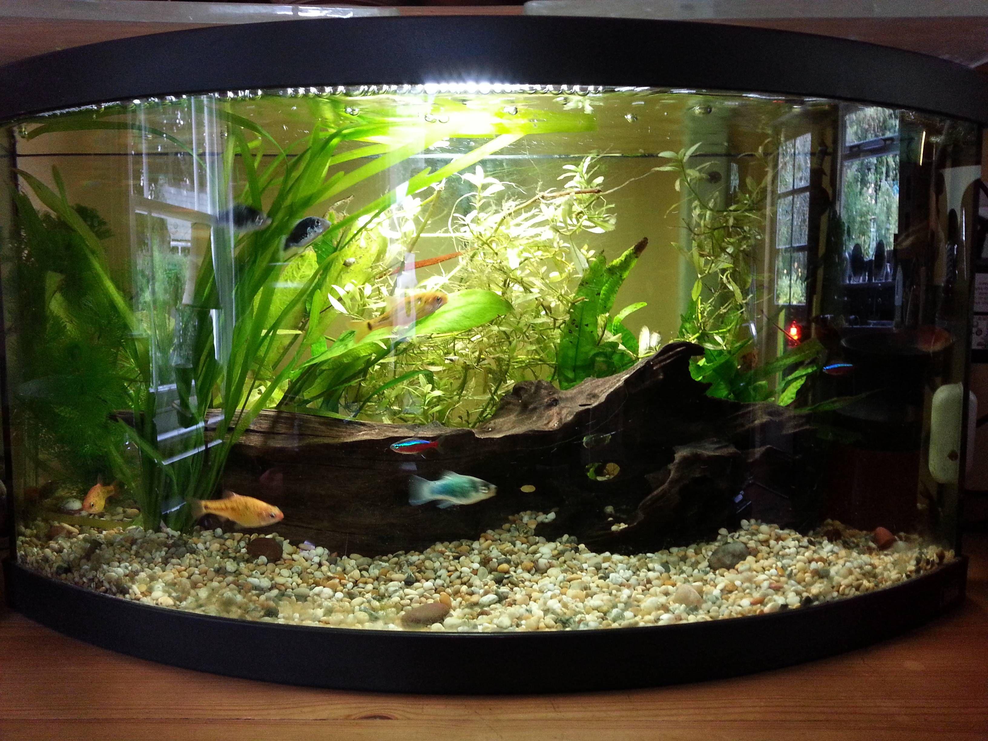 10 Gal Community Tank Reddit Com U Dylwil Aquarium Fish Tank Fish Tank Community Tanks