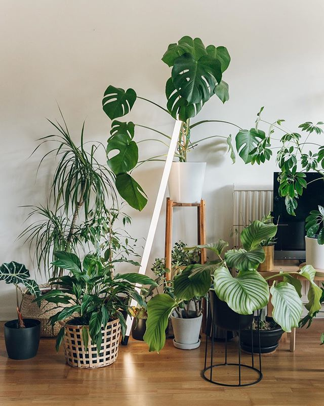 Indoor plants are love new video would you like  tour of our living room where we talk about some the and things that have also house plant display ideas rh pinterest
