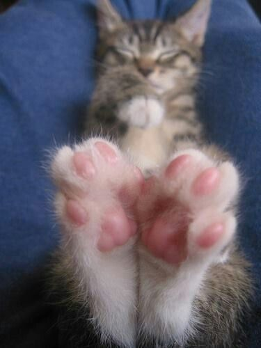 17+ Kitty toes information